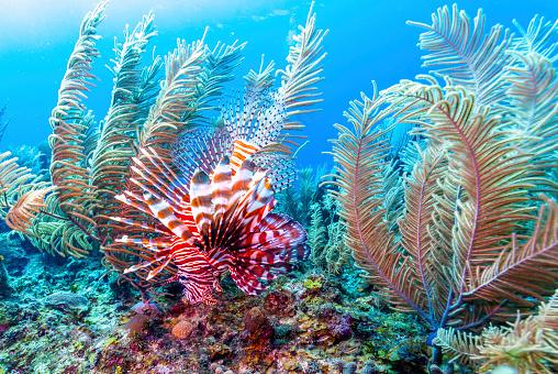 istock Coral garden in Caribbean 1148599034