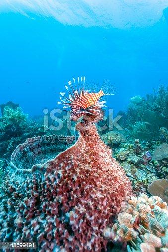 istock Coral garden in Caribbean 1148599491