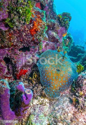 istock Coral garden in Caribbean 1155301340