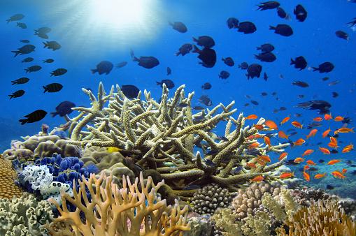 istock Coral garden in Caribbean 1170265236