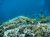 Colorful underwater scene of a tropical reef and fish. Go pro camera shot