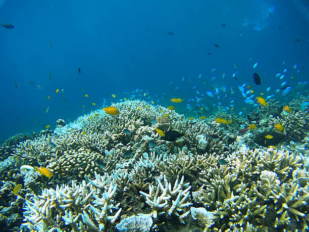 coral garden - great barrier reef stock pictures, royalty-free photos & images