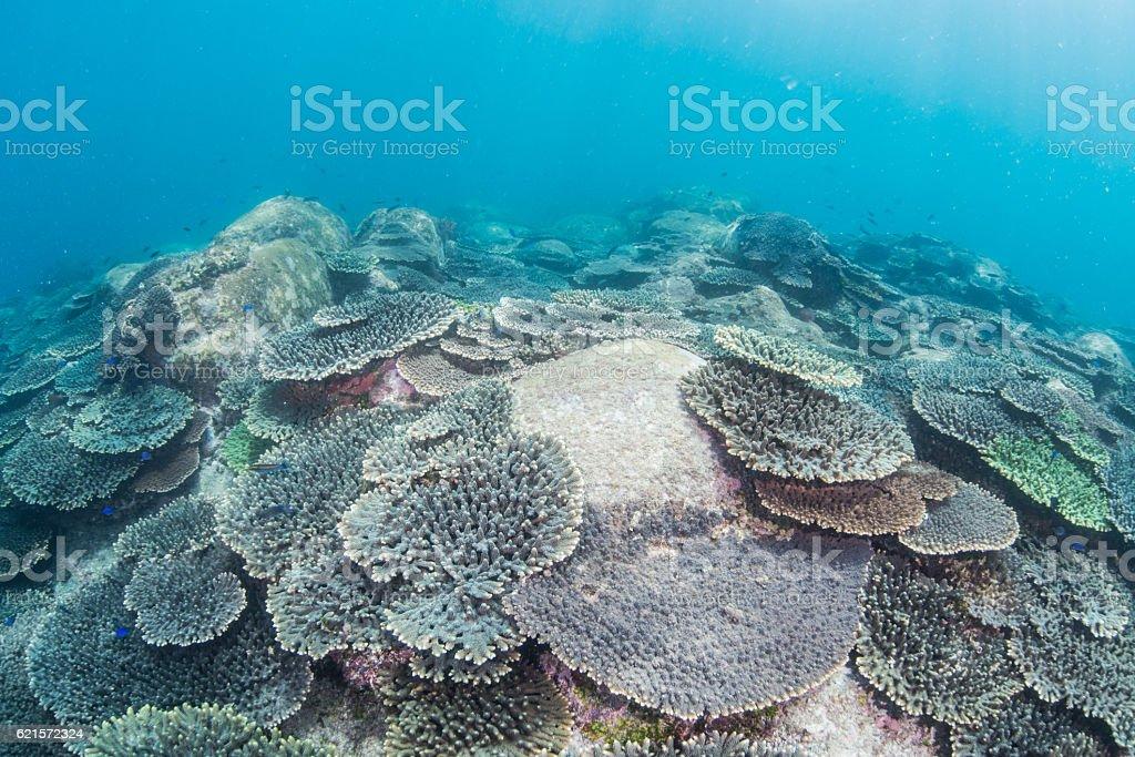 Jardin de corail photo libre de droits