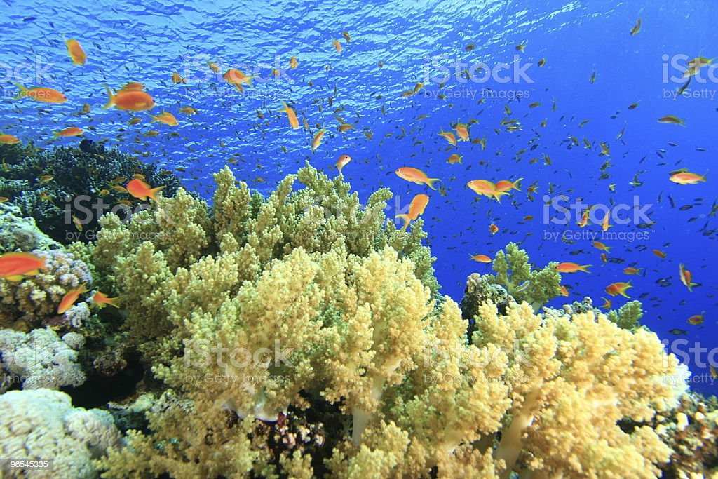 Coral Garden royalty-free stock photo