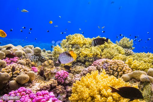 Coral Reef on Red Sea near by Marsa Alam.