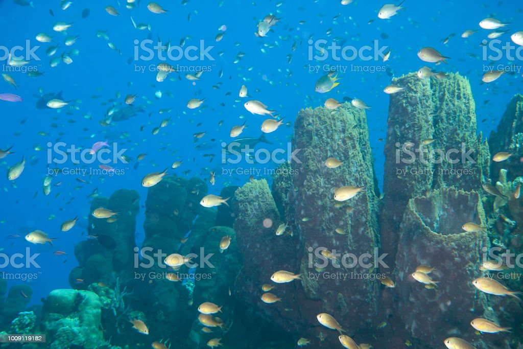 Coral garden with  a  lot of fishes around, Raja Ampat, West Papua,  Indonesia stock photo
