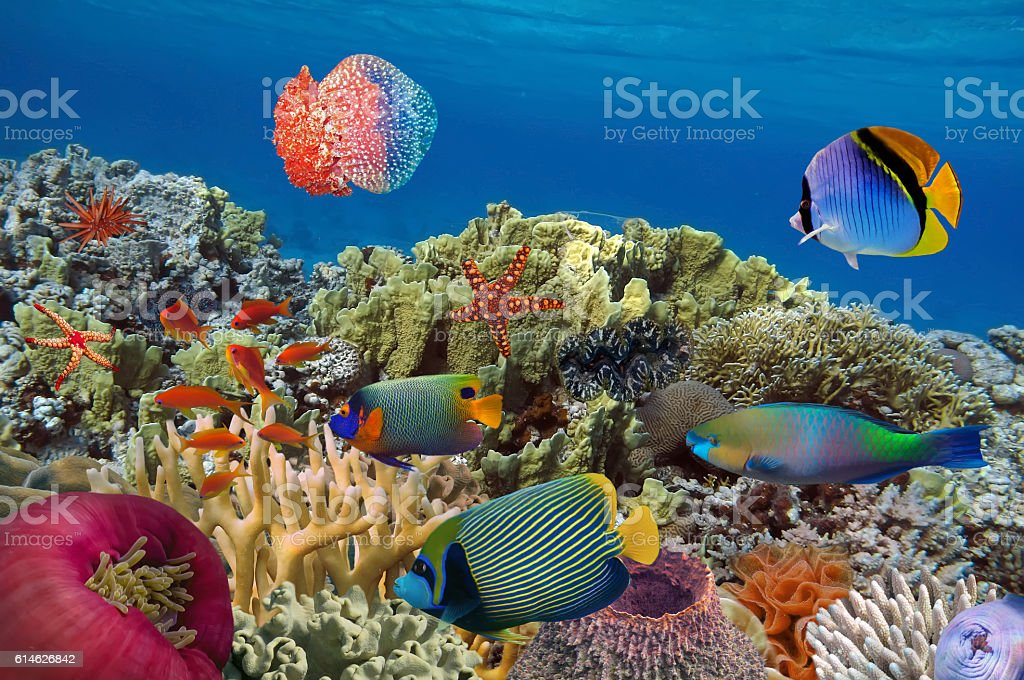 Coral garden with starfish and colorful tropical fish stock photo