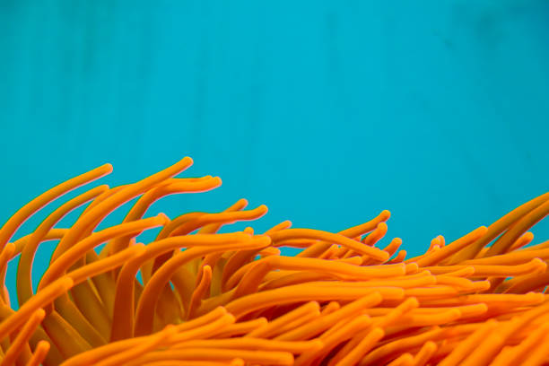 Coral in the ocean Koralle im Ozean sea anemone stock pictures, royalty-free photos & images