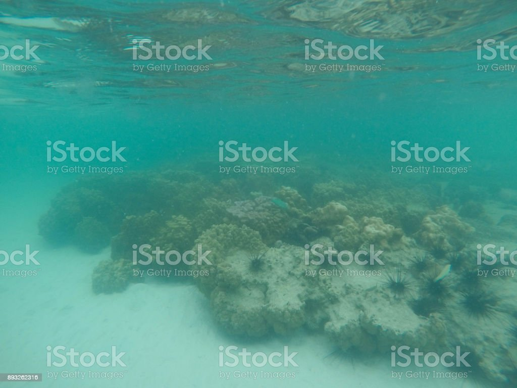Coral in the sea stock photo