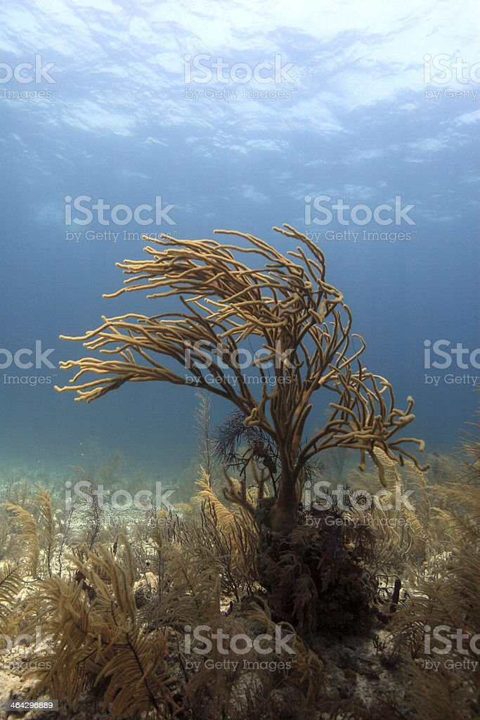 Coral Landscape royalty-free stock photo
