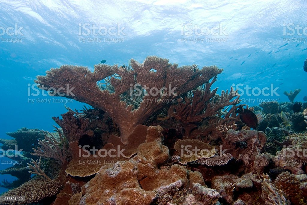 Coral Mount Pinnacle Reaches toward the Ocean's Surface stock photo