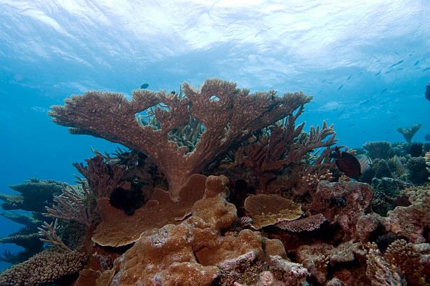 Coral Mount Pinnacle Reaches toward the Ocean's Surface stock photo