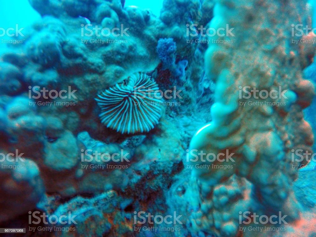 Coral off the coast of Nha Trang stock photo