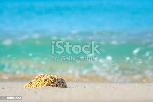 istock Coral on the beach and glittering light of the sea 1219585888