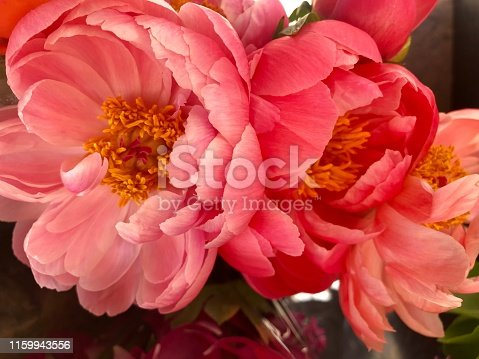 Closeup of two fully opened pink & coral-coloured peonies on a Florist stall at an outdoor market in the south of France