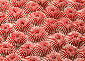 Detail of coral in the South China Sea.