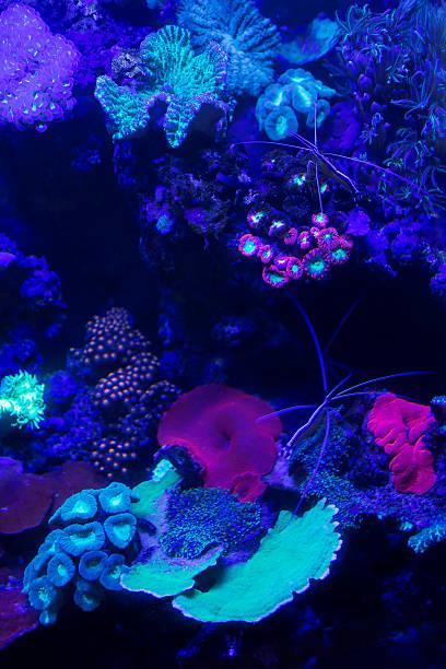 coral - fluoreszierend stock-fotos und bilder