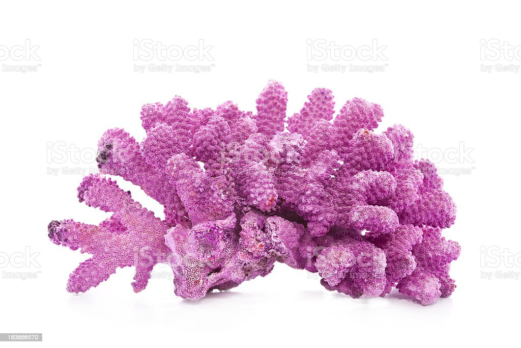 Coral stock photo