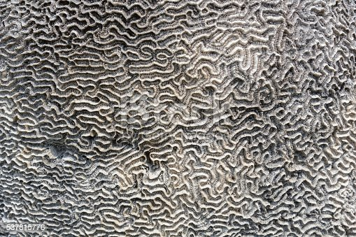 Coral on stone