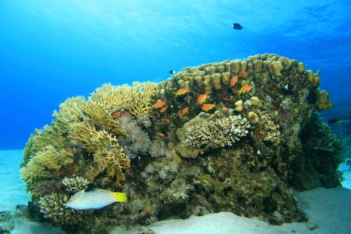 산호색 0명에 대한 스톡 사진 및 기타 이미지