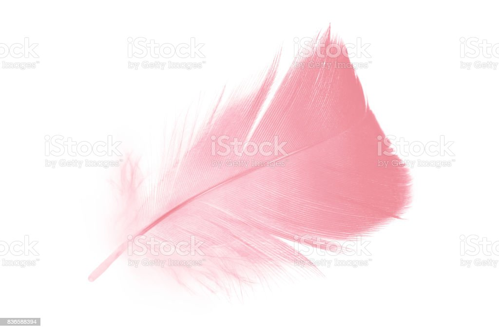 coral pink feather on white background stock photo