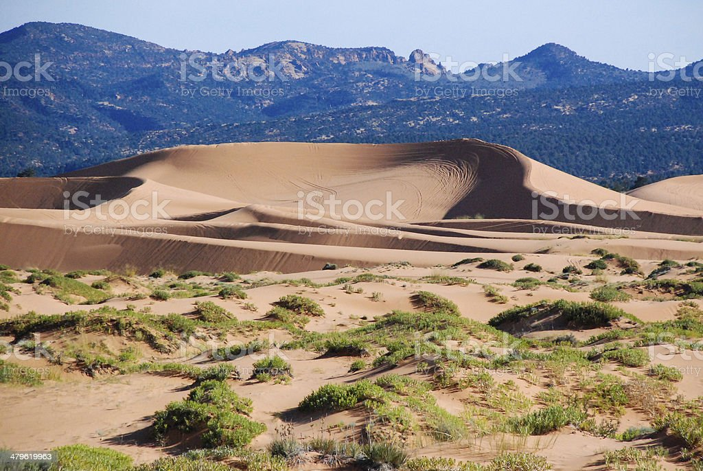 Coral Pink Sand Dunes State Park and Wildflowers Utah stock photo