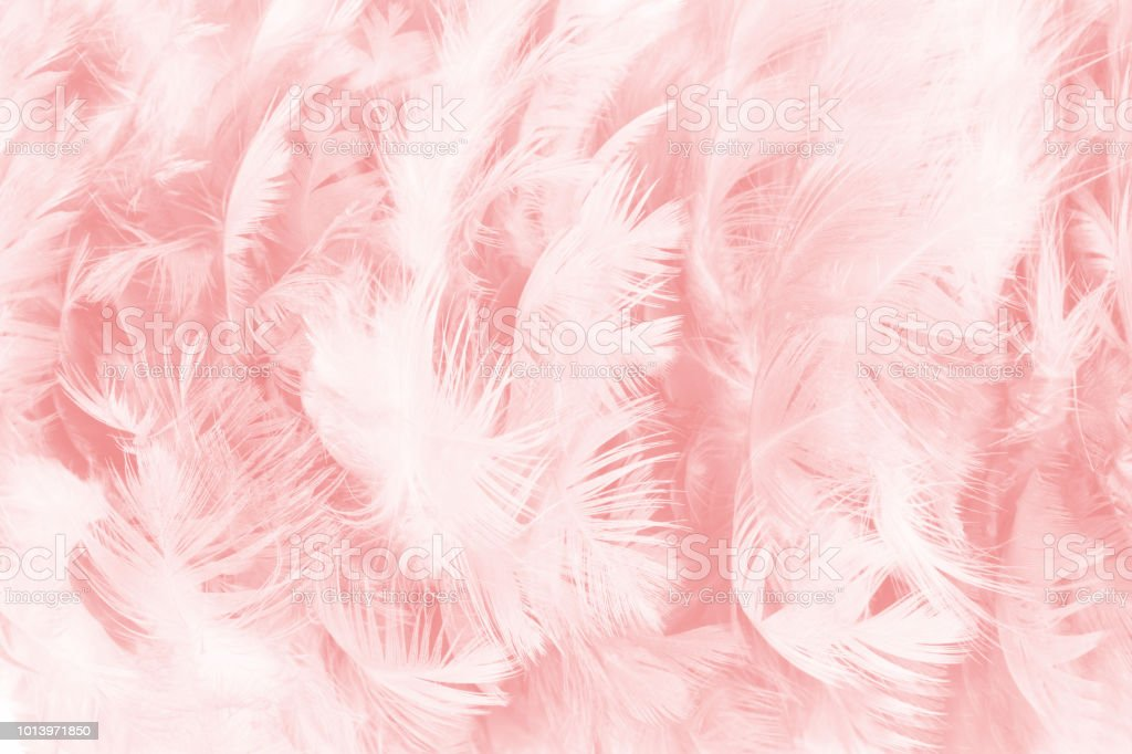 coral pink vintage color trends feather texture background stock