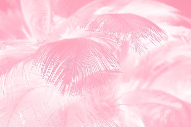 coral pink vintage color trends feather texture background - pfau bilder stock-fotos und bilder