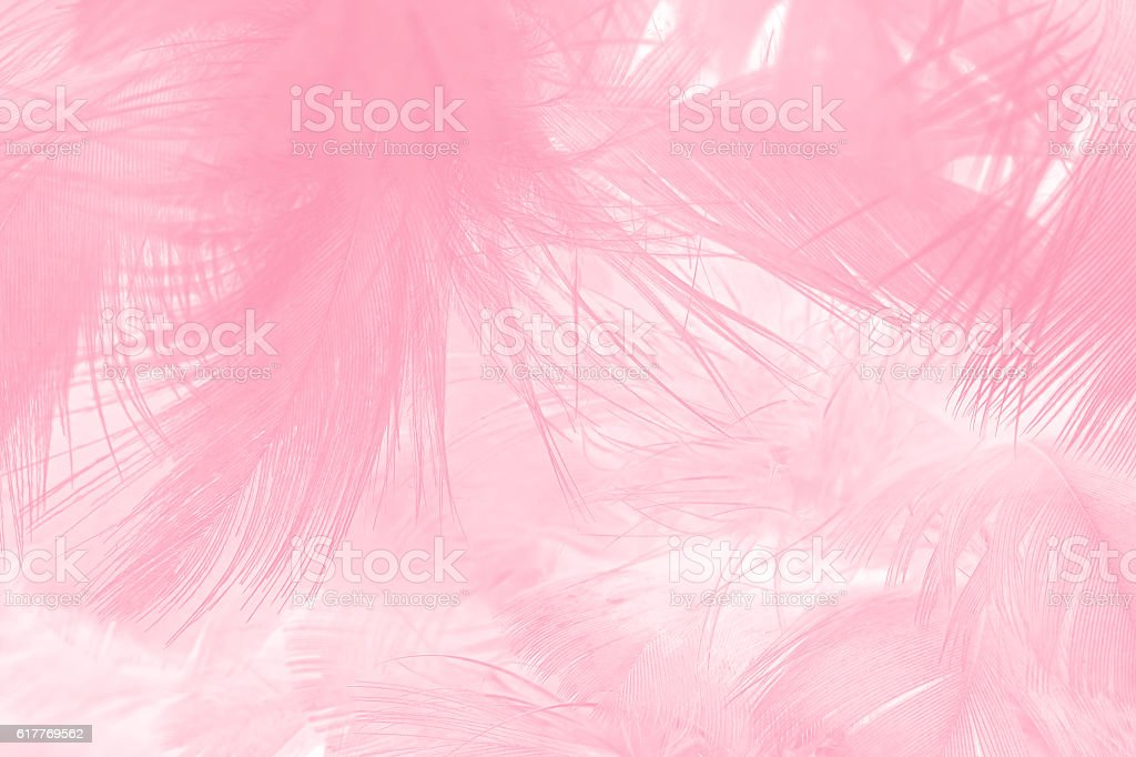 Coral pink vintage color trends feather texture background for Colour trend wallpaper