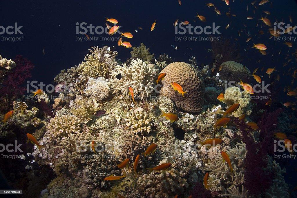 coral pinnacle and fish royalty-free stock photo