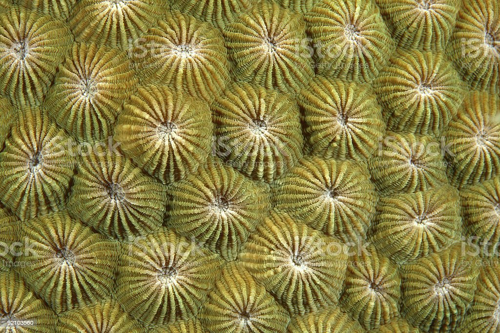 Coral Polyps Lizenzfreies stock-foto