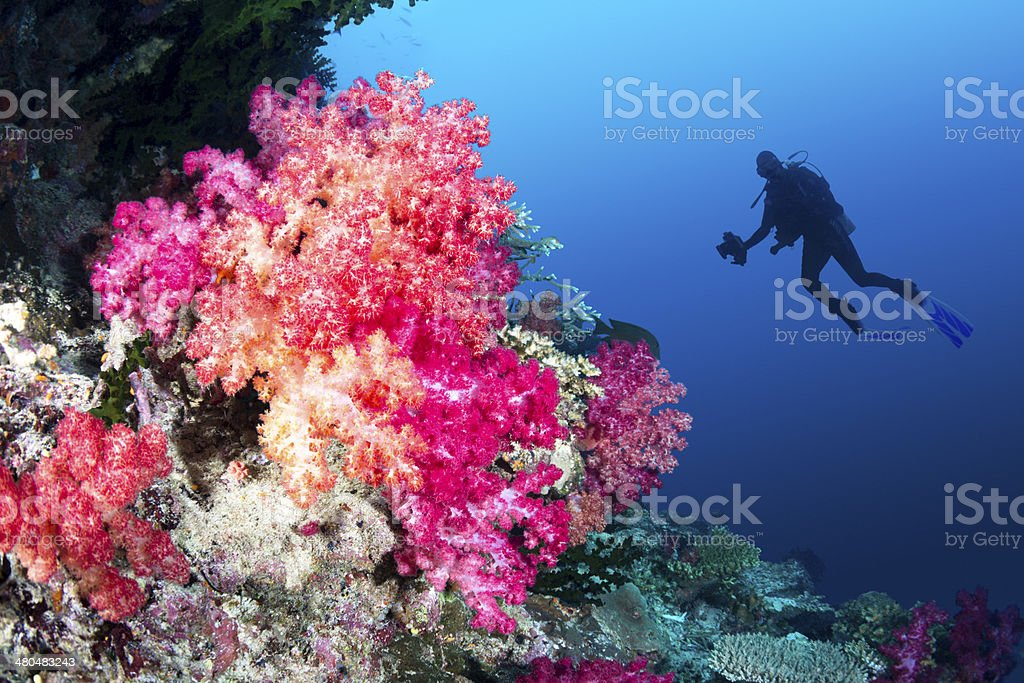 Coral reef and diver stock photo