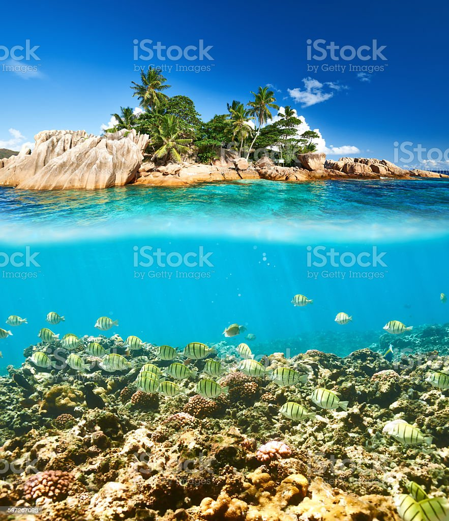 Coral reef and fish at Seychelles Lizenzfreies stock-foto