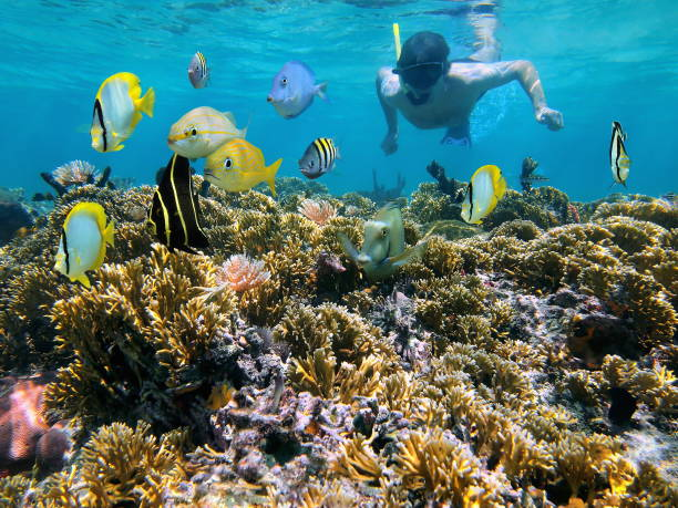 Coral reef and snorkeler Man snorkeling underwater on a shallow coral reef with tropical fish front of him, Caribbean sea underwater diving stock pictures, royalty-free photos & images