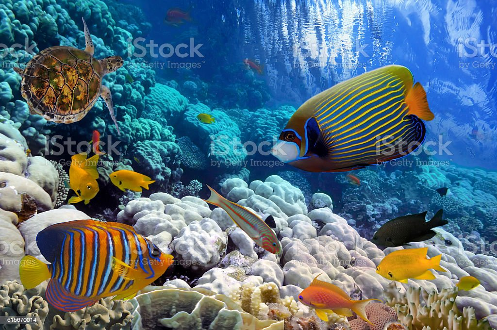Coral Reef and Tropical Fish iin the Red Sea, Egypt stock photo