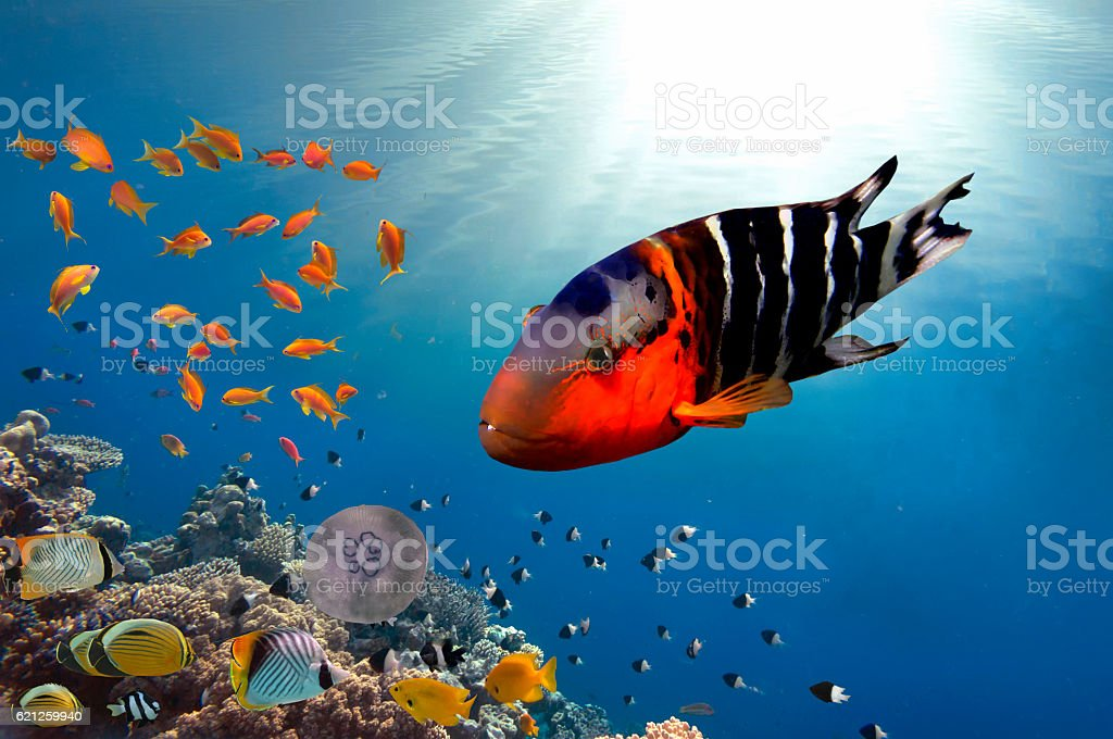 Coral Reef and Tropical Fish stock photo
