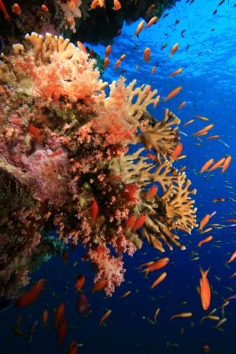 Coral Reef And Tropical Fish Stockfoto en meer beelden van Achtergrond - Thema