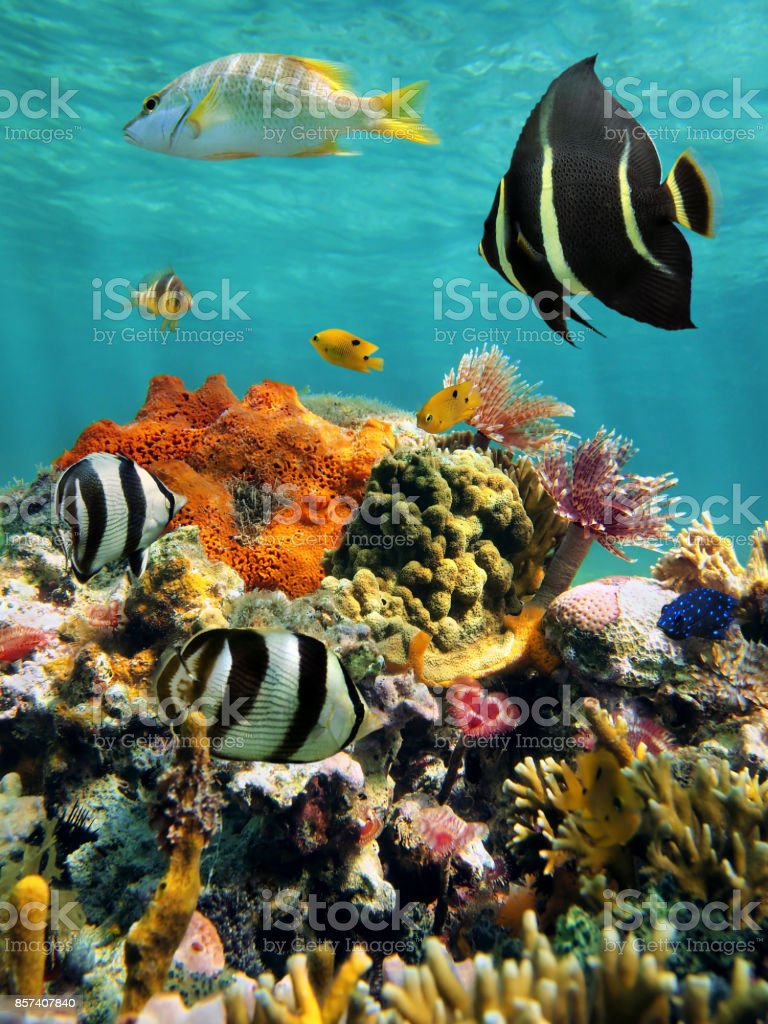 Coral reef and tropical fish with water surface stock photo