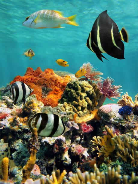coral reef and tropical fish with water surface - tropikalna ryba zdjęcia i obrazy z banku zdjęć