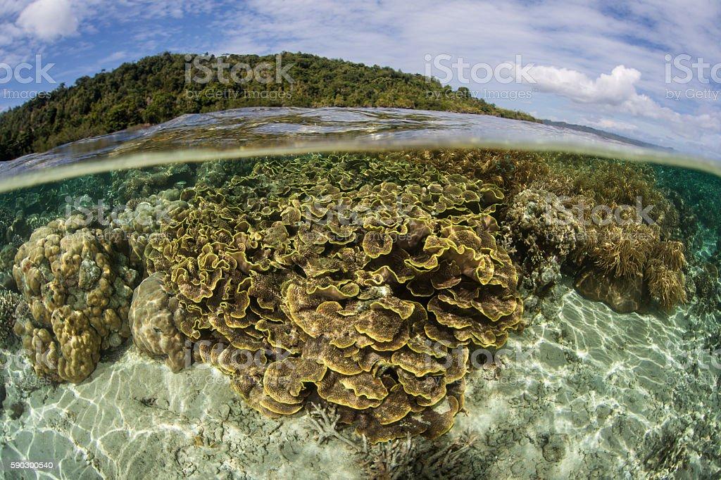 Coral Reef and Tropical Island royaltyfri bildbanksbilder