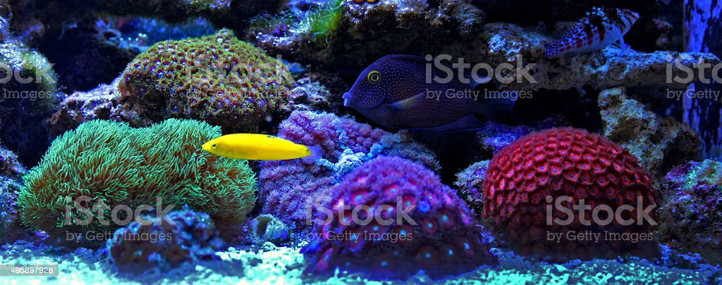 Coral reef aquarium scene stock photo