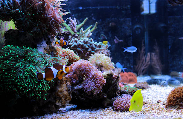 Coral reef aquarium tank Amazing side view of coral reef aquarium tank nemo museum stock pictures, royalty-free photos & images