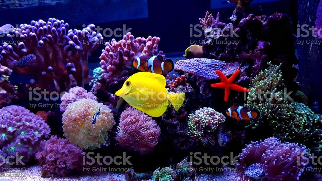 Coral reef aquarium tank scene stock photo