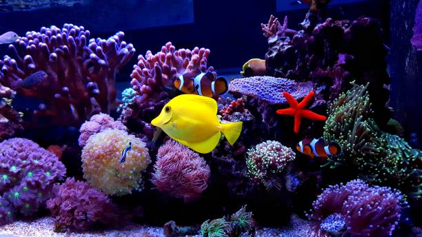 Coral reef aquarium tank scene One moment in saltwater aquarium tank polyp corals stock pictures, royalty-free photos & images