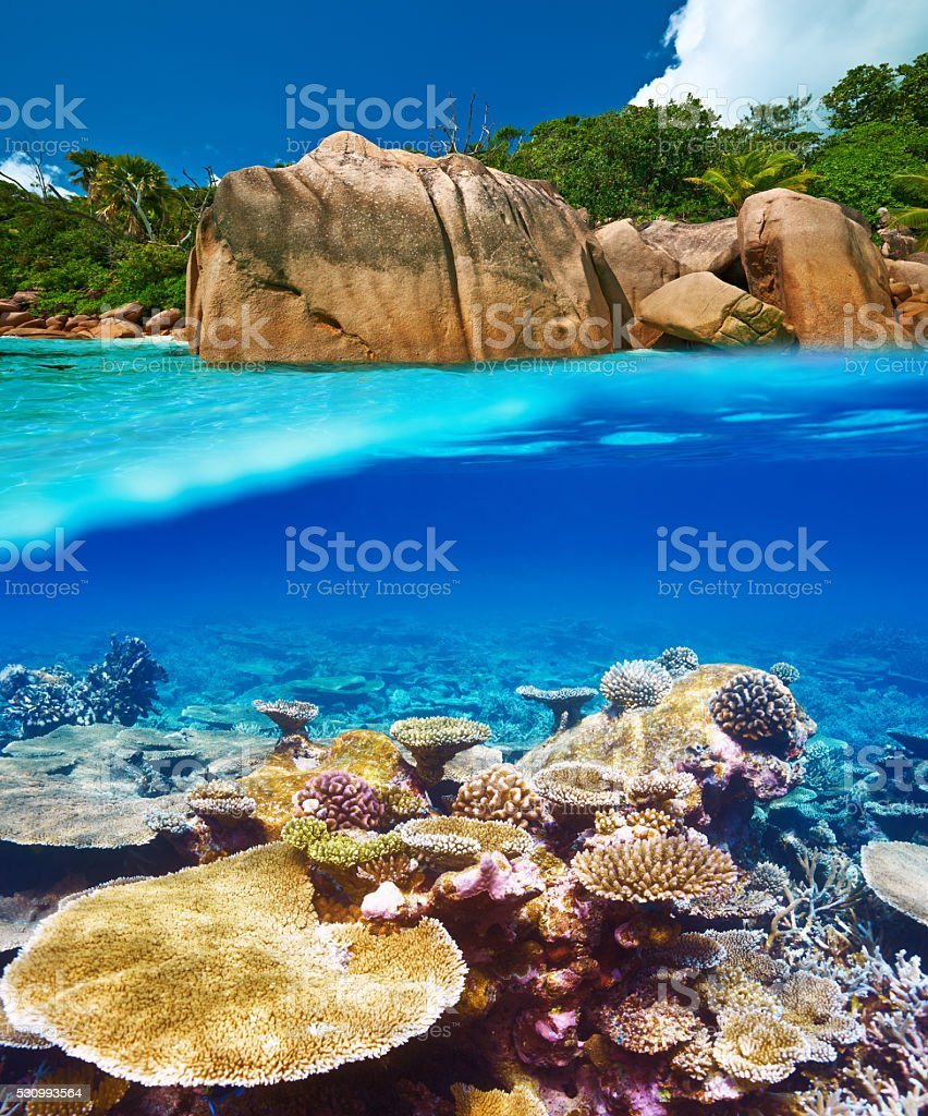Coral Reef At Seychelles Stock Photo & More Pictures Of