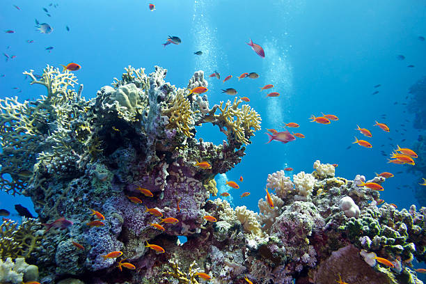 coral reef at the bottom of tropical sea - ocean floor stock photos and pictures
