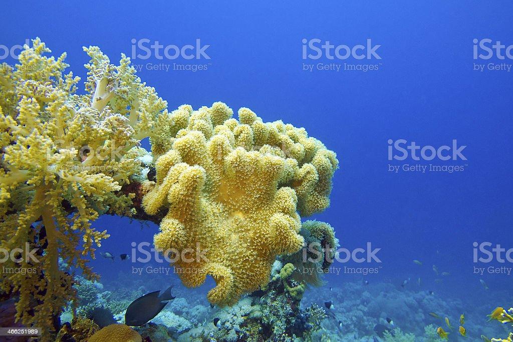 Fotografía de Arrecife De Coral En El Fondo Del Mar Tropical y más ...