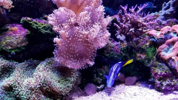 Coral Reef Background with Small Fish Swimming About stock photo