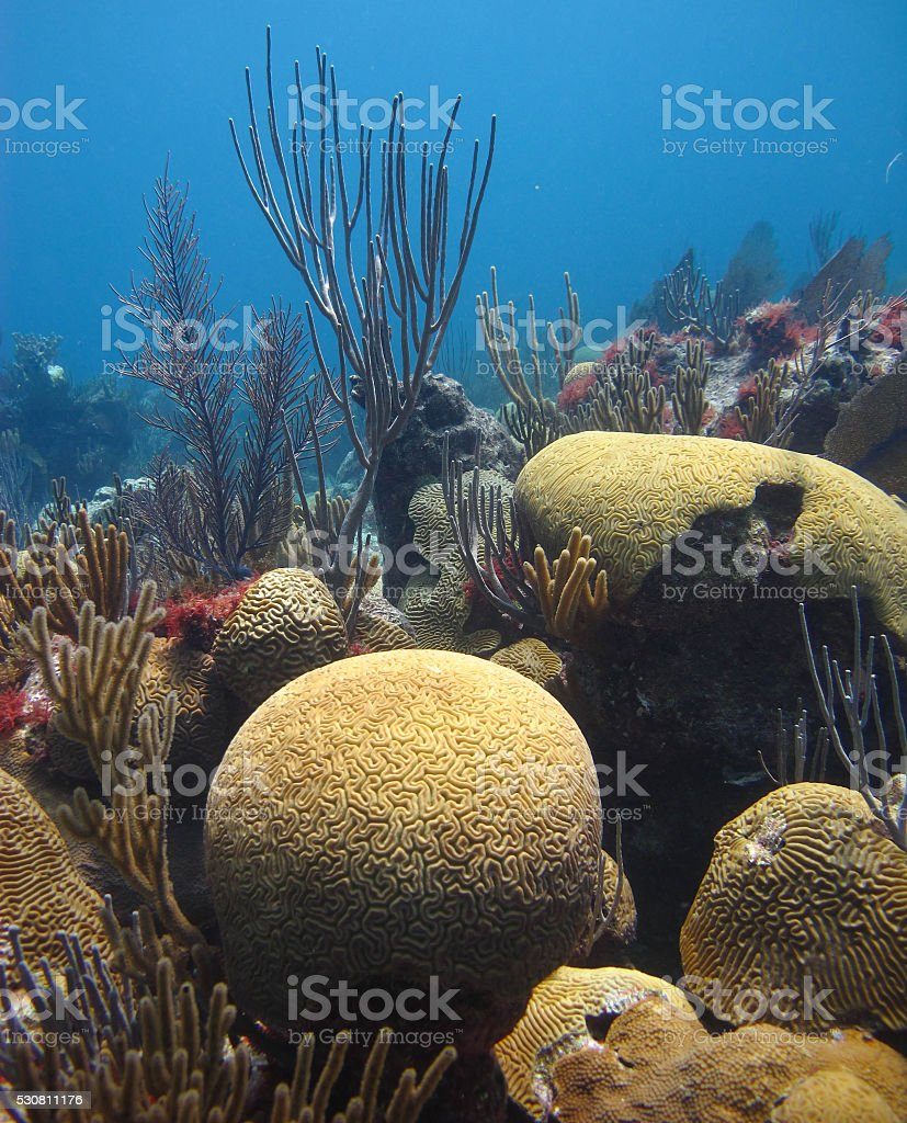 Coral Reef, Bermuda stock photo
