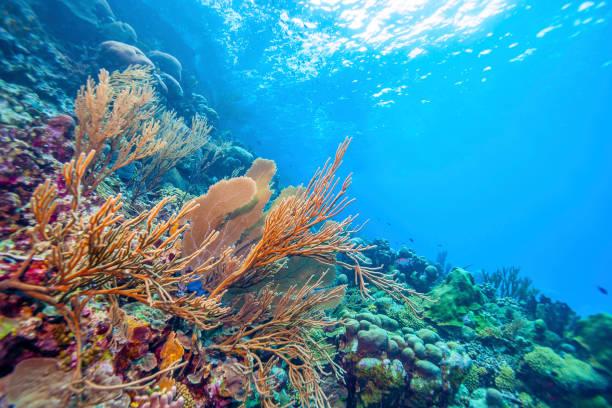 coral reef bonaire underwater - barriera corallina foto e immagini stock